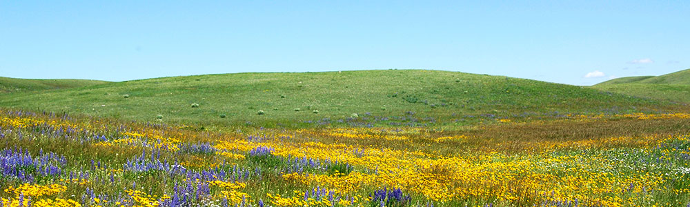 A sunny field full of wildflowers